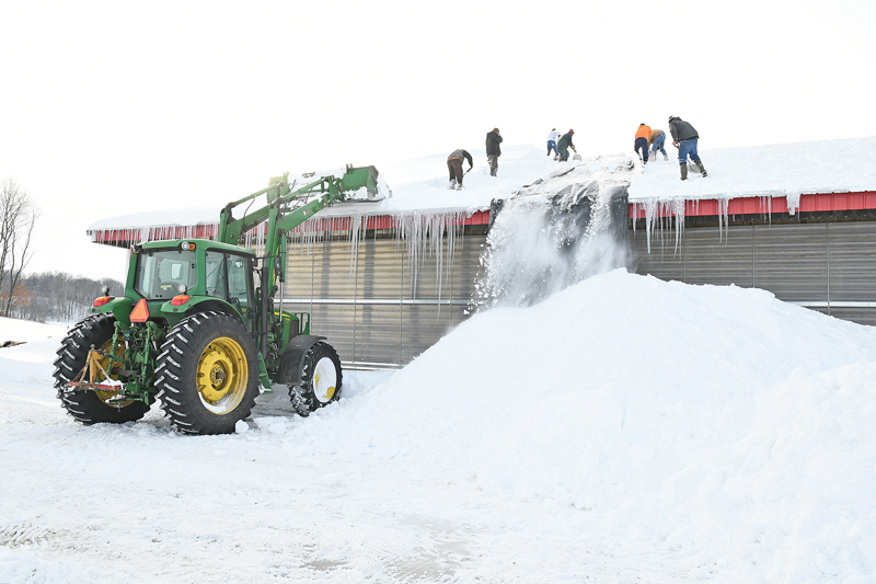 VOLUNTEEERS helped shovel snow off the barn roof at the Clark Ridge Farm, located on County Highway F south of State Road 170 in the Town of Sherman, Wednesday afternoon, February 13. A large section of the barn roof collapsed earlier that day killing 15 dairy cows and injuring others. No injuries to people were reported. —photo by Shawn DeWitt