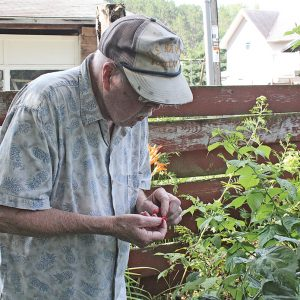 Hap Litzell berries