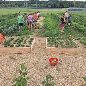 GC Summer School garden