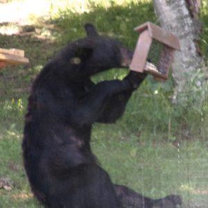 Bleak Bear snack