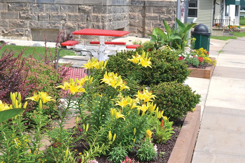Tower Park flower beds July 2020