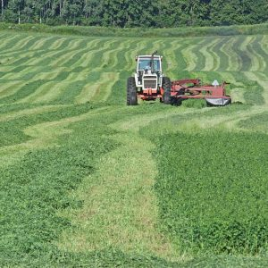 Cutting Hay in Hay River