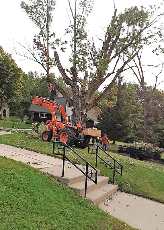 Removing trees near St. John's